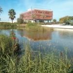 Naturalización de estanque en Geolit (Jaen)